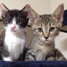 五ヶ月の姉妹猫