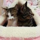 保護猫 仲良し兄弟