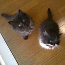 誰かもらって下さい!可愛い猫さんたちです。