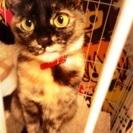 2歳のメス猫里親さんを探してます