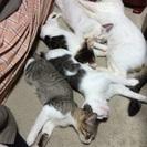 6ヶ月の子猫ちゃんたちですグッ!(•̀ᴗ•́)و ̑̑