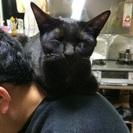 黒猫の里親募集中