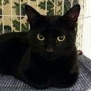 【新規受付中止】人も猫も大好き、美しく甘えん坊な黒猫リカち…
