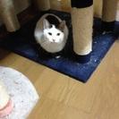白黒猫ちゃん❤︎