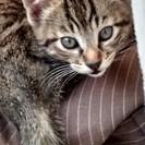 生後3ヶ月♂子猫
