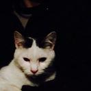 火災で家を失った猫たち