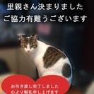 福生市から二匹の猫の里親さん急募です(全員引き渡しが済みま…