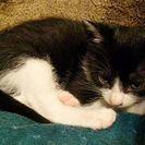 【終了しました】生後1か月の子ネコの里親を募集しています > 募...