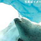 ★☆★TWELVE(トゥエルブ)企画!旭山動物園温泉日帰りツアーの...