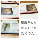 いろんな猫のメモ用紙