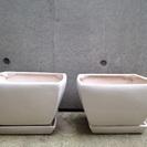 陶器植木鉢 スクエア8号