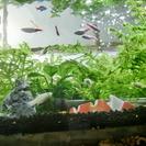 熱帯魚シルバーモーリーを生体交換して下さい!まだやってます。