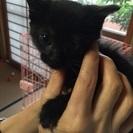黒猫ちゃん約生後1ヶ月