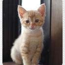 小さな子猫を貰って下さい。