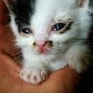 可愛い生後3週間ぐらいの子猫の家族を募集します‼️