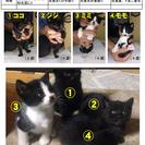 4月13日に生まれた仔猫の里親を募集します