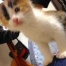 生後1か月の子猫ちゃんの里親さんになって下さい
