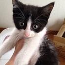 生後2ヶ月位の子猫です