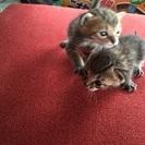 生後1〜2週間の捨て猫。