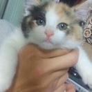 野良猫が隣人宅で産んだ三毛猫ちゃん