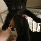 6月27日で、3ヶ月の子猫です