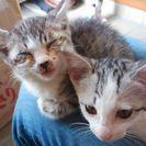 たくさんの子猫たちの里親募集中