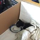 カラスに襲われてた子猫