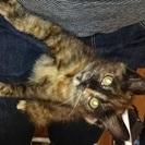 保護猫 メス生後2ヶ月