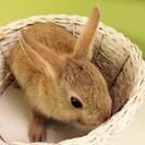 小さいミニウサギのこどもです。