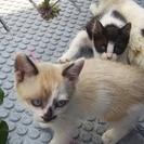 野良猫の子猫の里親募集です。