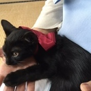 きれいな黒猫カラちゃん