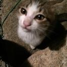 とても人懐っこい仔猫です。
