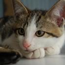 のんびり猫ちゃん   シロスケ  オス
