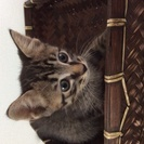 生後1ヶ月半の子猫です。飼って頂ける方に差し上げます。