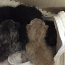 板橋区にて捨て猫4匹を保護しました。