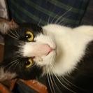 【急募】成猫の里親を募集してます