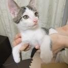 子猫3匹の里親募集 (1匹目柄:サバシロ? 2匹目柄:キジトラと...