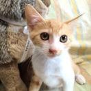 生後2か月のかわいい子猫