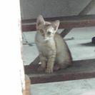 猫の里親募集(柳川市)