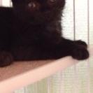 仔猫 真っ黒4ヶ月の女の子