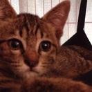 仔猫4ヶ月男の子