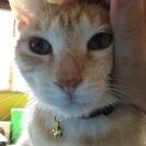 ずっとそばにいて、甘えん坊の美猫のケロくん