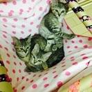 子猫♀3匹 避妊手術、ワクチン接種済み