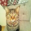 かわいい猫の里親探してます
