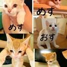 子猫もらってください(´ฅ•ω•ฅ`)♡
