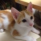 生後4ヶ月の子猫