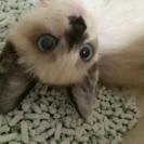 可哀想な捨て猫ちゃんの里親募集中