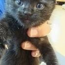 生後1ヵ月ネコ