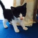黒白柄の子猫ちゃんです!