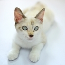 【里親募集】生後4ヶ月の元気なメス猫